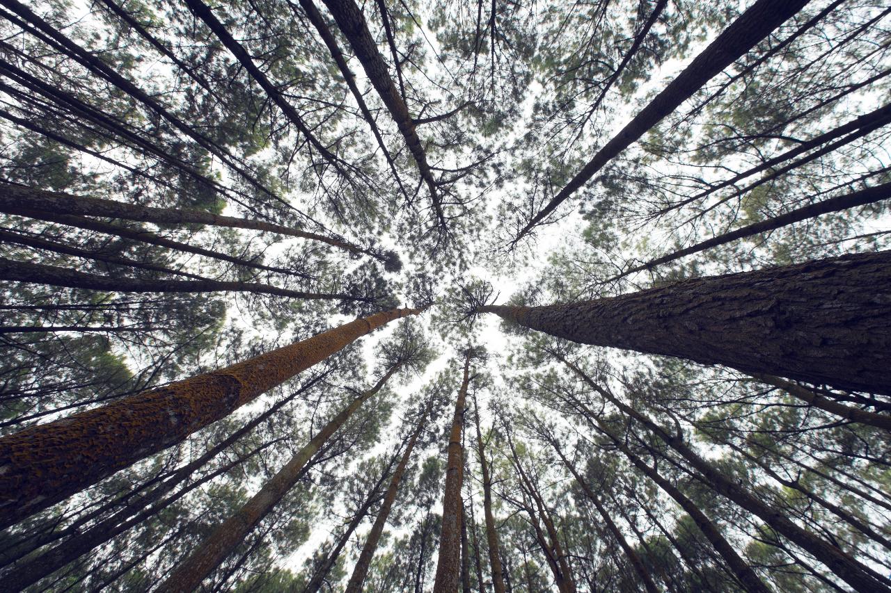 reizen travel 15 gedachten bij thuiskomst woods